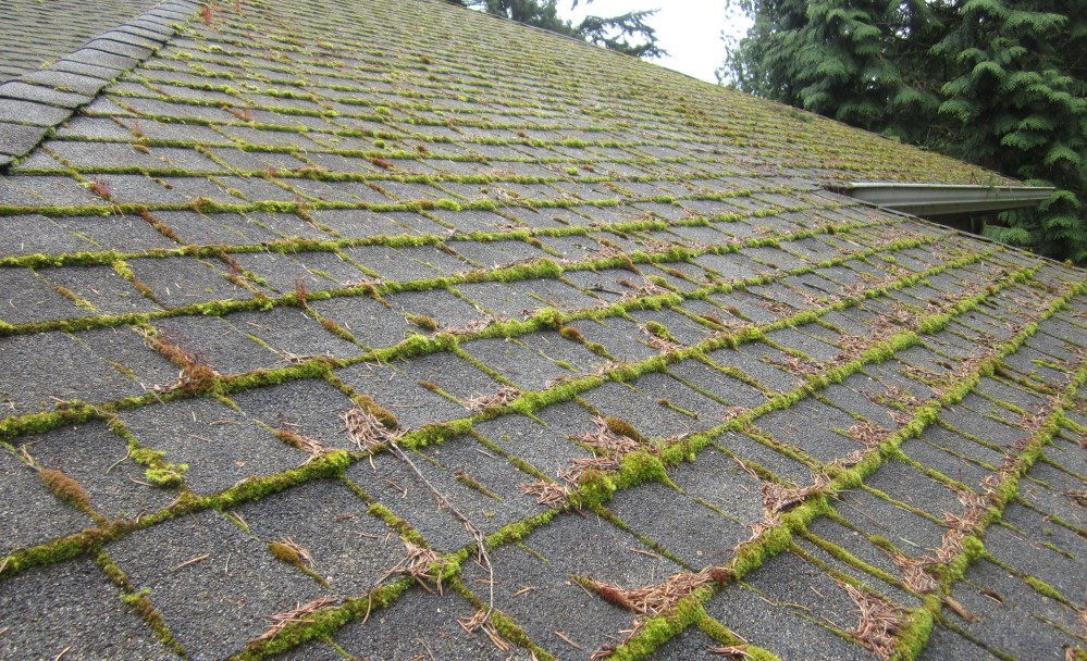 How To Keep Your Roof Moss Free Oregon Roof Guys